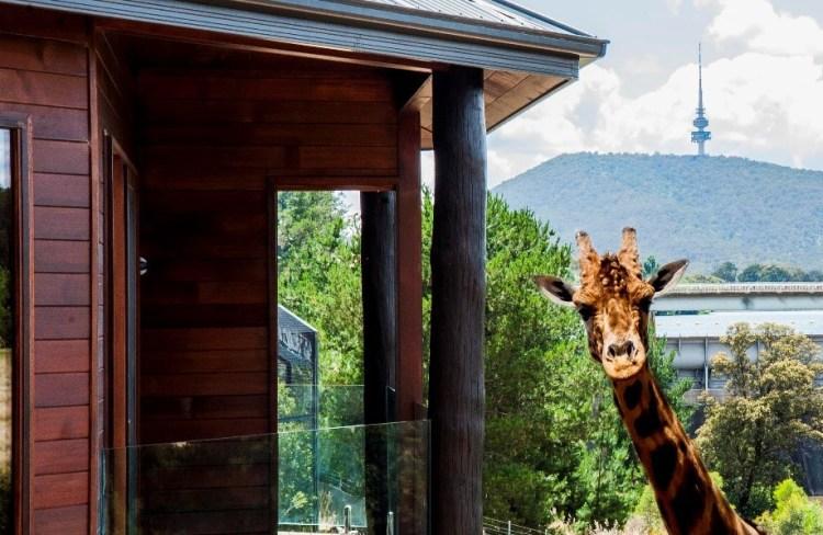 Giraffe Credit Jamala Lodge