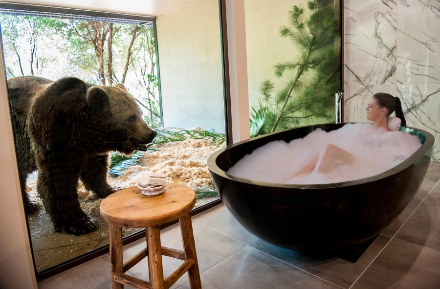 Jamala-wildlife-lodge-bear