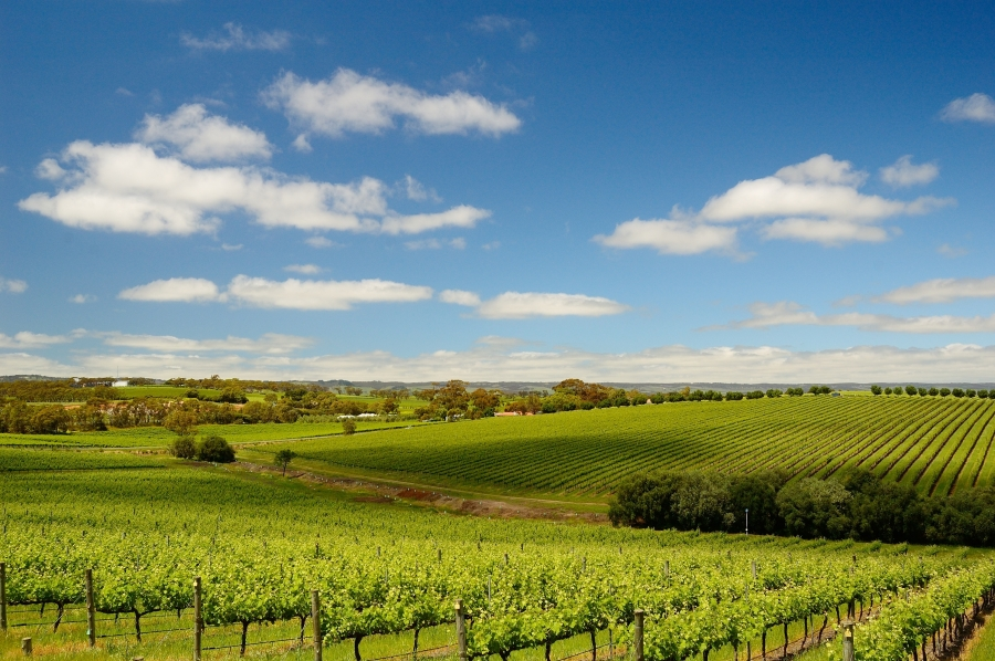 Wineries of McLaren Vale